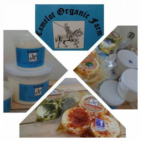 Camelot Organic Dairy Farm